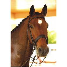 VESPUCCI ROLLED WEYMOUTH BRIDLE