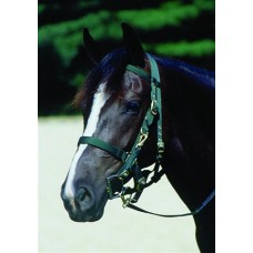 SIERRA WEB HALTER/BRIDLE with REINS