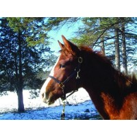 ACADIA TURNOUT HALTER, BROWN, WEANLING