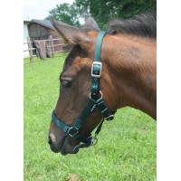 CAVALIER CUSHION WEB FOAL HALTER