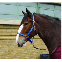 CAVALIER DRAFT HALTER, TONGUE BUCKLE