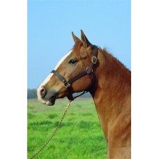 IMPERIAL 1 inch STABLE HALTER, HAVANA