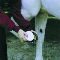3M ANIMALINTEX HORSE HOOF SHAPED POULTICE, package of 3
