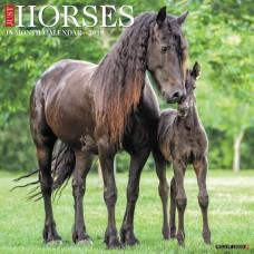 2019 HORSES CALENDAR