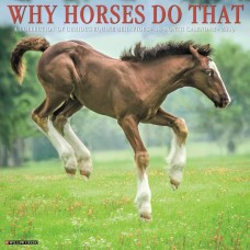 2019 WHY HORSES DO THAT CALENDAR