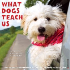 2020 WHAT DOGS TEACH US CALENDAR